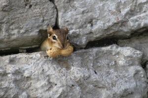 Un écureuil à High Park
