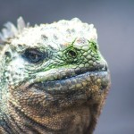 Galapagos On A Budget – 11 Sites and Activities