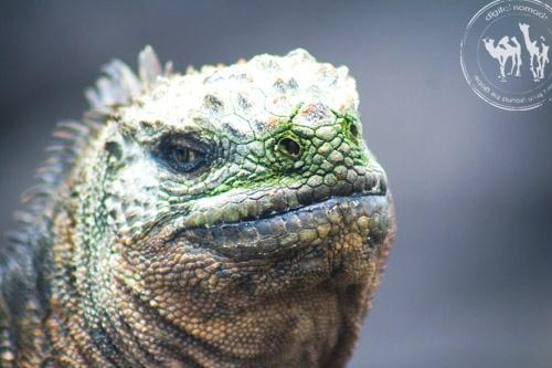 Les Galapagos, 11 sites et activités abordables