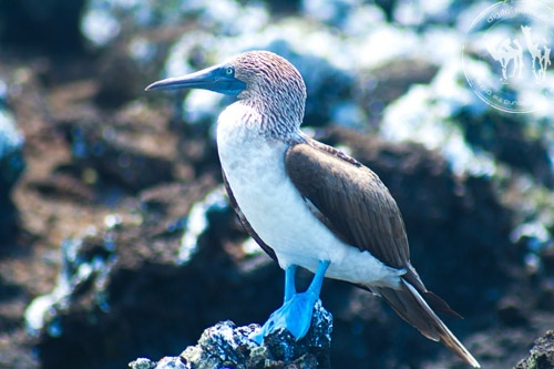 40 observations sur les Galapagos