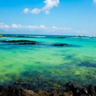 7 Jours- 988$: une semaine aux Galapagos sans se ruiner