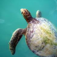 Les Galapagos pour pas cher
