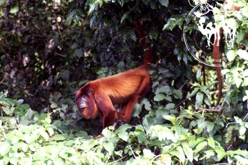 غابات الأمازون، الحياة البرية والطبيعة في بوليفيا الجزء الثالث