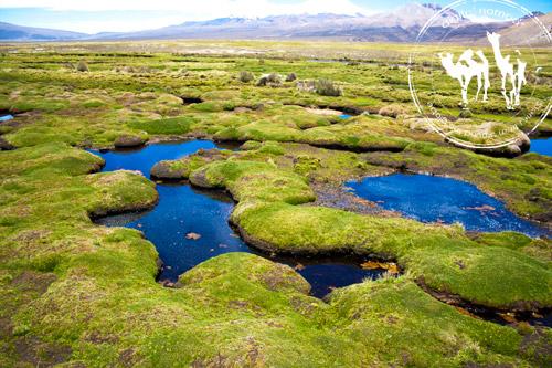 محمية سخاما، الحياة البرية والطبيعة في بوليفيا الجزء الثاني