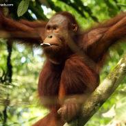 Semmengok Wildlife Rehabilitation Center Step by Step
